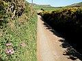Lane at Llanfaelrhys - geograph.org.uk - 468443.jpg