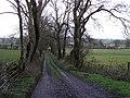 Lane near Lowtown - geograph.org.uk - 719193.jpg