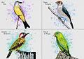 Las aves de Cali - Gloria Sthefany Muriel Lorza.jpg