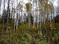 Latvijas smaguma centra ainava. 2008-10-12 - panoramio.jpg