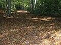 Leaf fall in College Wood, Goring Heath, Oxfordshire.jpg