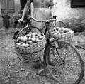 """Lesen """"rušt"""" na kolesu. Tako vozijo sadje v """"zejih"""", Slavče 1953 (2).jpg"""