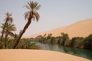Wildlife of Libya -  Ecoregion of Ubari oasis - with lakes in Erg Awbari (Idehan Ubari) in the Sahara Desert region of the Wadi Al Hayaa District, of the Fezzan region in southwestern Libya.