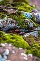 Lichen (24028063893).jpg