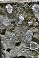 Lichen on worm-carved rock (8051038567) (2).jpg