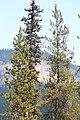 Little Yoho Valley IMG 4896.JPG