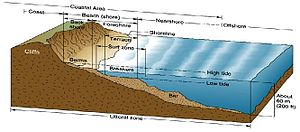 Littoral zone