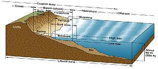 Littoral zone Part of a sea, lake or river that is close to the shore
