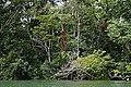 Livingstone, Rio Dulce - panoramio - Frans-Banja Mulder.jpg