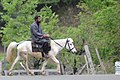 Lone horseman.jpg