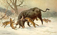 An Aurochs fighting a Eurasian Wolf pack.
