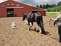 Long lining a horse.jpg