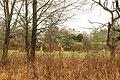 Looking Towards The Field (137974769).jpeg