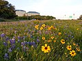 Loop 360 Flowers - panoramio.jpg