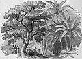 Louis Antoine de Bougainville - Voyage de Bougainville autour du monde (années 1766, 1767, 1768 et 1769), raconté par lui-même, 1889 (p168 crop).jpg