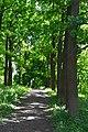 Lutsk Volynska-Dubovyi hai natural monument-alley.jpg