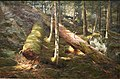 MBAM Edson - Forêt primitive.jpg