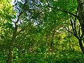 MD.DN.Rediul Mare - park of Rediul Mare - apr 2018 - 53.jpg