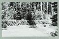 METSÄ ON SUOMEN TUKI -istutus, Finlandian risteys, Harju 1950s PK0099.jpg