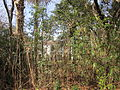 Magnolia Lane Plantation House side reeds 2.JPG