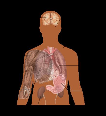 Основные симптомы передозировки кофеином