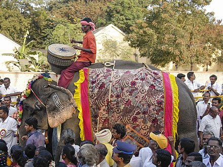 Man Riding an Elephant in a Pongal Festival Parade in Namakkal Man Riding an Elephant in a Pongal Festival Parade in Namakkal, Tamil Nadu.jpg