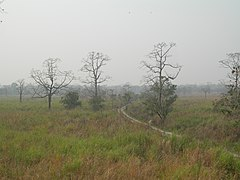 Manas Wildlife Sanctuary-118454.jpg