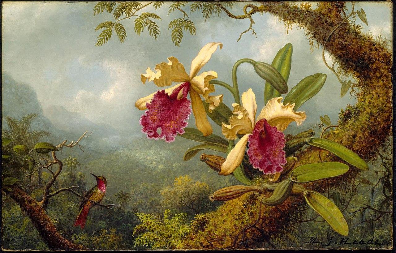 Мартин Джонсон Хид - Орхидеи и колибри - 47.1164 - Музей изящных искусств Arts.jpg