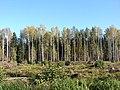 Mežs, Valgundes pagasts, Jelgavas novads, Latvia - panoramio (1).jpg
