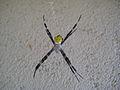 Medusa Spider.jpg