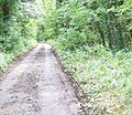 Metalled track, Dinton Beeches - geograph.org.uk - 931366.jpg