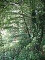 Mill Covert - geograph.org.uk - 249672.jpg