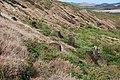 Moai na Rano Raraku - panoramio.jpg