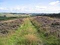 Moorland Track - geograph.org.uk - 214920.jpg