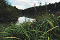 Moscow, Los Pond in Losiny Ostrov forest (21594477679).jpg