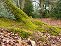 Moss on trunk (detail) (6958303826).jpg