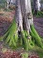 Mossy tree, Cranny - geograph.org.uk - 1073576.jpg