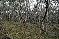 Mount Aggie, Brindabella Range, Namadgi National Park 02.jpg