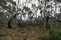Mount Aggie, Brindabella Range, Namadgi National Park 04.jpg