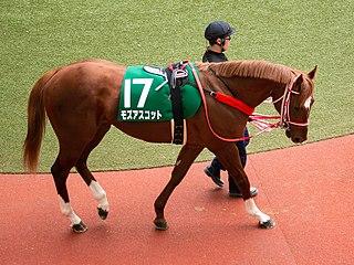 Mozu Ascot American-bred racehorse