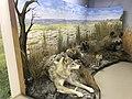 Museum of Chyornye Zemli Nature Reserve 05.jpg