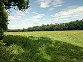 NSG Bruchbach-Otterbachniederung, Wiesen am Otterbach bei Kandel.jpg
