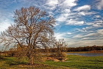 NSG Oderwiesen nördlich von Frankfurt (Oder) 2.jpg