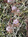 NTS - Wild Flowers 021.jpg