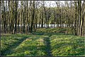 Nagykálló, 4320 Hungary - panoramio (16).jpg