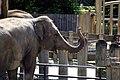 National zoological park, Washington DC, USA (569682730).jpg