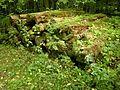 Nationalpark Hainich, Baumstämme, die sich die Natur zurückholt.jpg
