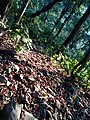Natural Habitat in Buxa forest.jpg