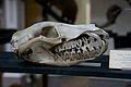 Natural History Museum, Dublin (6915986933).jpg