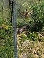 Natuurpark Lelystad - Otter (Lutrinae) v5.jpg